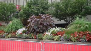 plaza flowers 2